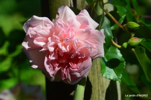les roses,les 4 filles,jardin,Julie,coquelicots,cygnes 006.JPG