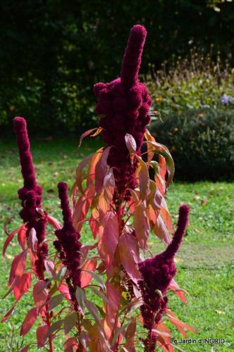 jardin ,chez Fabien,automne 086.JPG