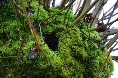 Grues et plantes à Ciron 012.JPG