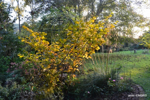 Jardin à l'automne 146.JPG