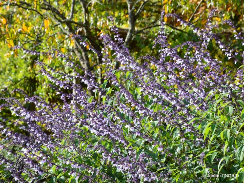 jardin automne,voisinage,canal 042.JPG