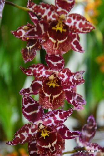 Orchidées,Noel jardiland,lever du soleil 045.JPG
