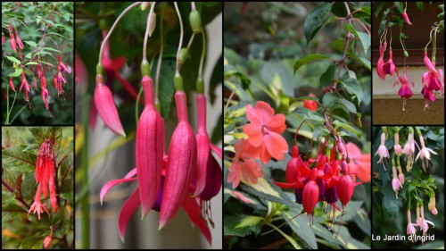 2014-08-15 jardin,les filles,fleurs Peyrichou.jpg