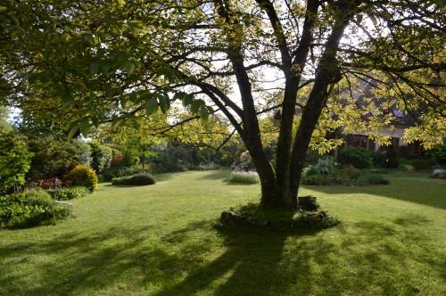 jardin,premières roses,colline,avant l'orage 119.JPG