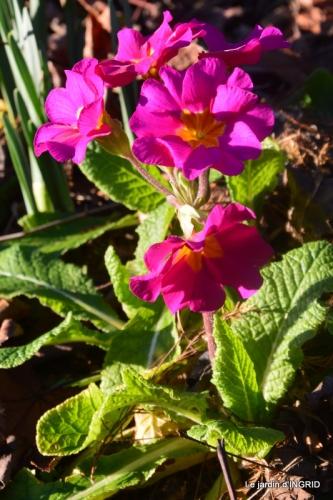 fleurs de janvier ,coucher de soleil,compo de tulipes 029.JPG
