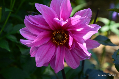 confiture,bouquet,petit jardin 020.JPG
