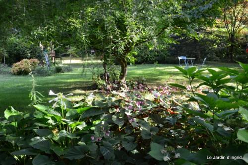 jardin le matin,la mare 046.JPG