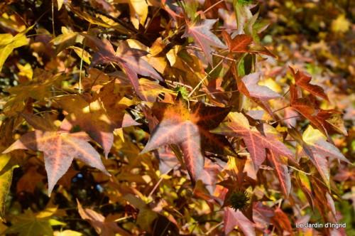 automne,arbres,inondation 100.JPG