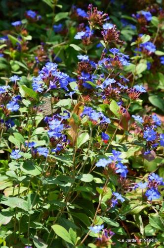 jardin ,bouquet 066.JPG