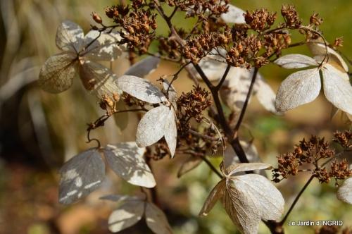 jardin ,semis,marron 015.JPG