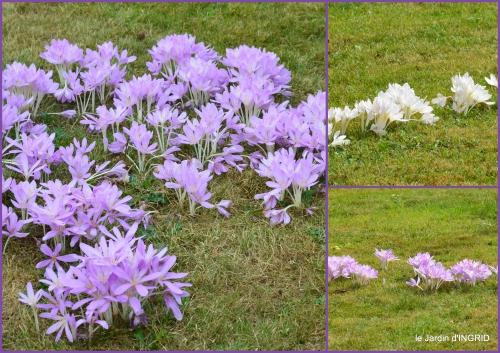 2016-09-13 bouquet,jardin de Monet,les vaches,Pourville sur mer14.jpg