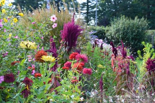 jardin Mme Perichou,grandes fleurs,bouquet,jardin 022.JPG