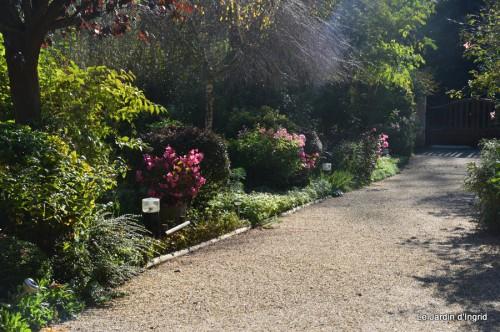 ménage automne,plectanthrus,feuillages 022.JPG