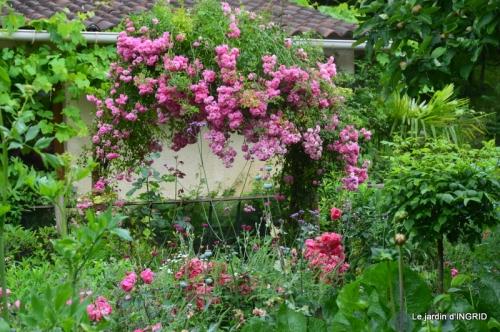 mon jardin,dégats buis, 016.JPG