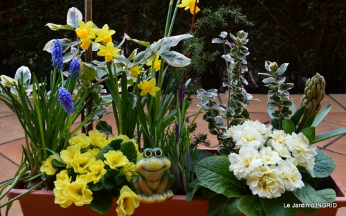rose blanche,jardinière ,jardin,pt cyclamen 006.JPG