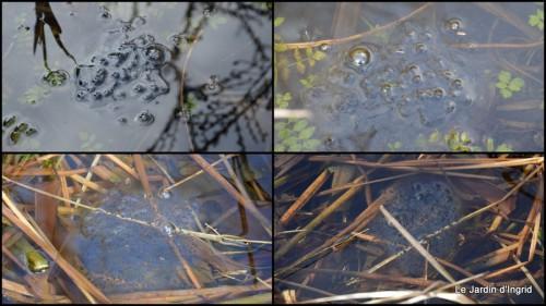 2014-02-21 jonquilles,tableau d'ambience,champignons,gouttes d'eau2.JPG