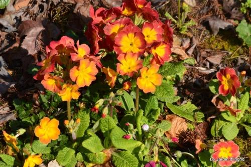 tonte,jardin,fleurettes 011.JPG