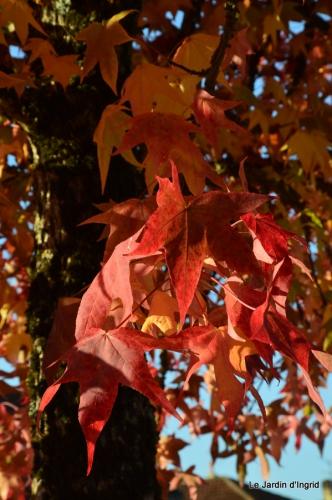 jardin automne,Arya avec Nicky 081.JPG