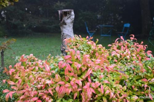 brouillard le matin d'automne 043.JPG