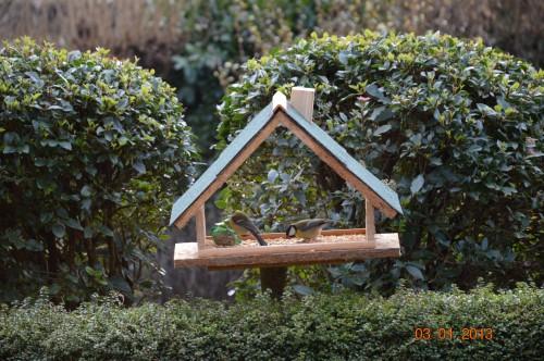 filles en bleu,jasmin,poules,oiseaux terrasse 026.JPG