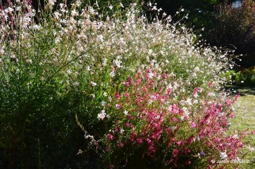 jardin,arrosage,pourpre,bouquet 027.JPG