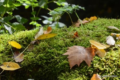 canal automne ,jardin,Ines 097.JPG
