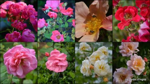 2013-08-29 jardin,fruits,Caro,papillons,manthe religieuse,Lalinde4.JPG