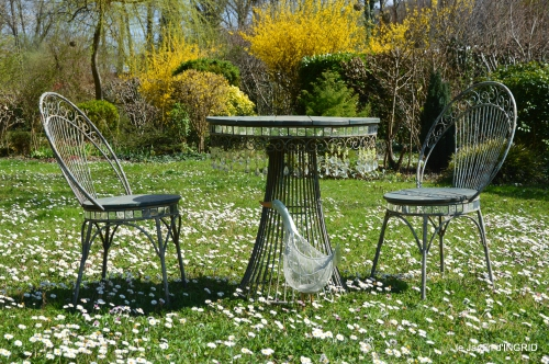 saumon,paquerettes,jardin blanc 100.jpg