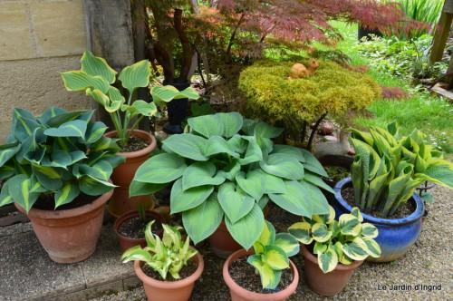 géraniums,glycine Monpazier,cabane,arums,fleurs sauvages 146.JPG