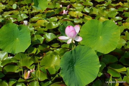 les jardins d'eau de Carsac 015.JPG