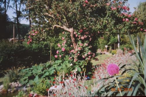 jacinthe,oiseaux,gouttelettes,vieilles photos,dégats 060.JPG
