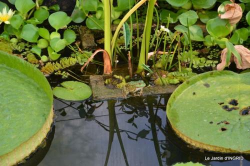 les jardins d'eau de Carsac 148.JPG