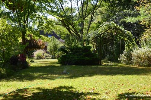 jardin,arrosage,pourpre,bouquet 119.jpg