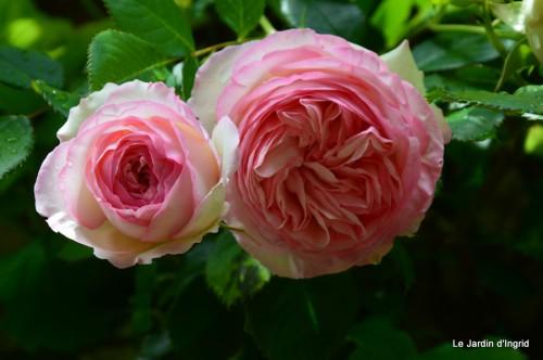 jardin,roses,cabane 109.JPG