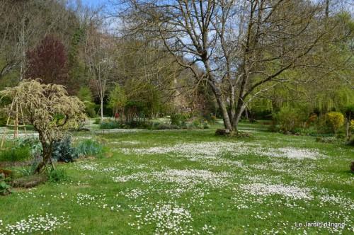 jardin ,cane sauvage,paquerettes,tulipes 119.JPG