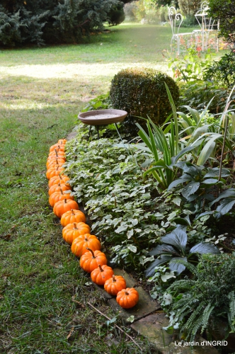 automne, décos cucurbitacées,jardin 021.JPG
