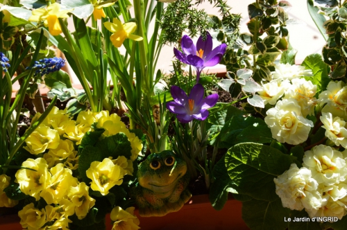 jardinière,insectes,achats 005.JPG