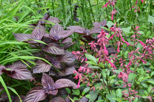 jardin,chez Bernadette,puces,cygnes,pluie 111.JPG