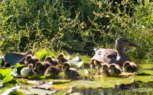 puces Lalinde,bébés canards,au moulin souci 181.JPG