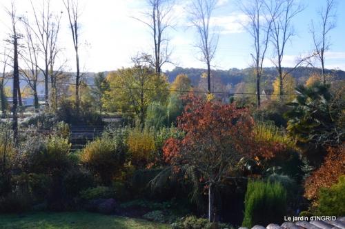 merles,pluie,jardin,automne 019.JPG