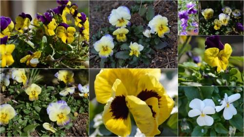 2013-02-18 mousse,Couse,anniversaire Romane,fleurs février6.jpg