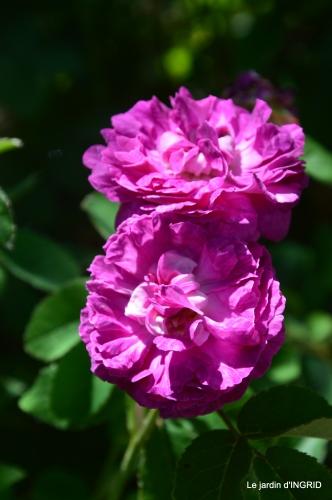 les roses,les 4 filles,jardin,Julie,coquelicots,cygnes 117.JPG