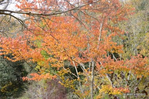troc,automne,serre 032.JPG