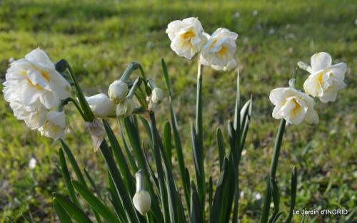 Beaumont,tulipes,primevères et autres,chez Bernadette 062.JPG