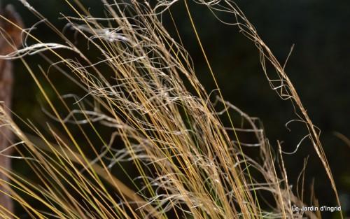 petit érable,le canal et lejardin àl'automne 080.JPG