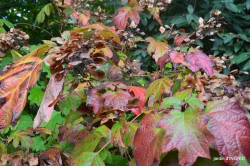 couleurs d'automne,bouquet,lune 018.JPG