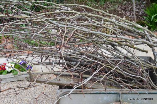 jardin (3 semaine de mars) 037.JPG
