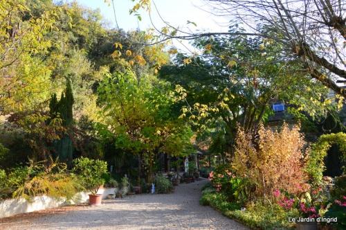 jardin automne,Arya avec Nicky 068.JPG