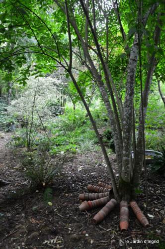 asters,bouquets,jardin de Lilianne 092.JPG