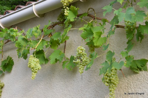 jardin,fruits,Caro,papillons,manthe religieuse,Lalinde 019.JPG